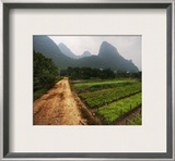 Gardens in the Mist Framed Photographic Print by Trey Ratcliff