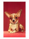 Chihuahua, Retro Prints