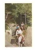 Bretton Woods Rangers, New Hampshire Photo