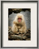Snowy the Snow Monkey Framed Photographic Print by Trey Ratcliff