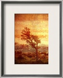 The Tree Alone Against the World Framed Photographic Print by Trey Ratcliff