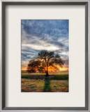 Her Evening Elegance Framed Photographic Print by Trey Ratcliff