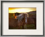 The Golden Horse in Iceland Framed Photographic Print by Trey Ratcliff