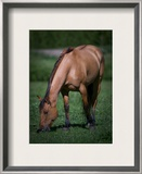 Horse in Field Framed Photographic Print by Trey Ratcliff