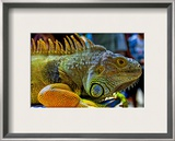 Ready to Strike Framed Photographic Print by Trey Ratcliff