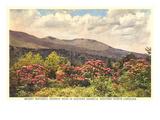 Mt. Mitchell, Western North Carolina Prints