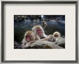Sleeping Snow Monkeys Framed Photographic Print by Trey Ratcliff