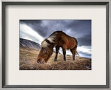 An Icelandic Horse in the Wild Framed Photographic Print by Trey Ratcliff
