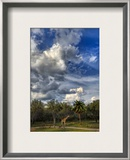 A Giraffe on the Savannah Framed Photographic Print by Trey Ratcliff