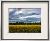 Flowers in the Field Framed Photographic Print by Trey Ratcliff
