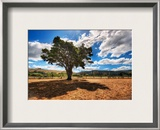 Pasture Sentinel Framed Photographic Print by Trey Ratcliff