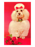 Poodle with Roses Prints