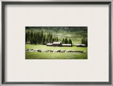 Horses at f/1.4 Framed Photographic Print by Trey Ratcliff