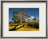Bilbo's Hobbit Hole and the Party Tree in the Shire Framed Photographic Print by Trey Ratcliff