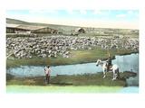 Ranch d'élevage de moutons, Montana Affiches