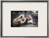 A Gentle Kiss in the Hot Tub Framed Photographic Print by Trey Ratcliff