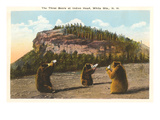 Bears at Indian Head, White Mountains, New Hampshire Prints