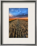 Cutting the Wheat Framed Photographic Print by Trey Ratcliff
