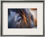 The Gentle Eye of the Beast Framed Photographic Print by Trey Ratcliff