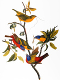 Audubon: Bunting, 1827 Giclee Print by John James Audubon