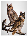 Audubon: Owl Print by John James Audubon