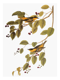 Audubon: Warbler Giclee Print by John James Audubon