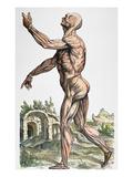 Vesalius: Muscles 02, 1543 Giclée-Druck von Andreas Vesalius