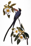 Audubon: Flycatcher, 1827 Giclee Print by John James Audubon