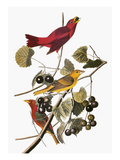 Audubon: Tanager Giclee Print by John James Audubon