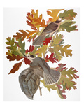 Audubon: Jay Prints by John James Audubon