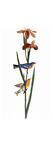Audubon: Warbler, 1827 Reproduction procédé giclée par John James Audubon