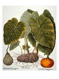 Gourd, Taro, & Pumpkin Prints