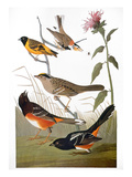 Audubon: Various Birds Art by John James Audubon