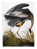 Audubon: Heron Giclee Print by John James Audubon