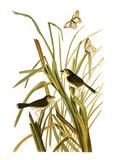 Audubon: Sparrow, 1827 Impression giclée par John James Audubon
