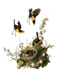 Audubon: Yellow Chat Giclee Print by John James Audubon