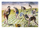 Florida Native Americans:Tilling 1591 Prints by Theodor de Bry