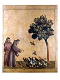 St. Francis Of Assisi Reproduction giclée Premium