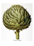 Artichoke, 1613 Giclee Print by Basilius Besler
