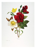 Redoute: Hellebore, 1833 Giclee Print by Pierre-Joseph Redouté