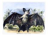 Vampire Bat Posters