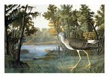 Lesser Yellowlegs Premium Giclee Print by John James Audubon