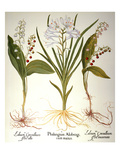 Lily-Of-The-Valley Premium Giclee Print by Besler Basilius
