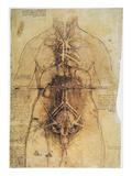 Leonardo: Anatomy, C1510 Prints by  Leonardo da Vinci