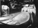 Alien Photograph Photographic Print