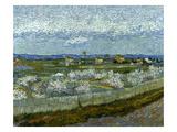 Van Gogh: Peach Tree, 1889 Prints by Vincent van Gogh