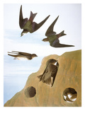 Audubon: Swallows, 1827-38 Art by John James Audubon
