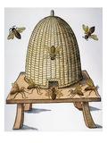 Beehive, 1658 Gicléedruk
