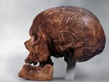 Cro-Magnon Skull Photographic Print
