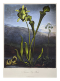 Thornton: Bog Plants Giclee Print by Thomas Sutherland